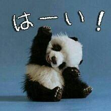 札幌 ビジネスホテル/【緊急企画】シャンシャン誕生おめでとう!バジェットは3300円で祝福プラン♪